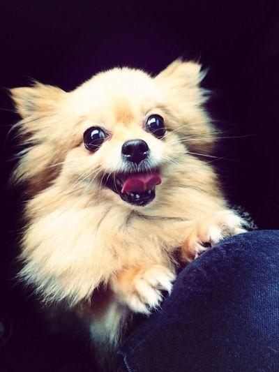 Greatlife/ happy dog
