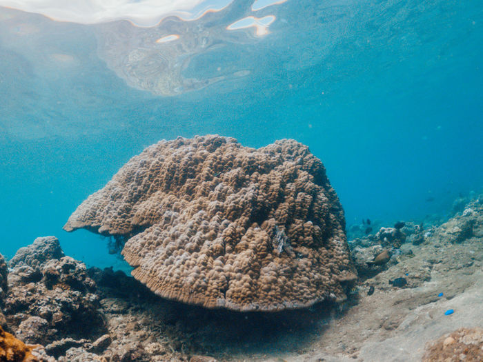 Underwater shot of coral reef, lipah beach, amed, bali.