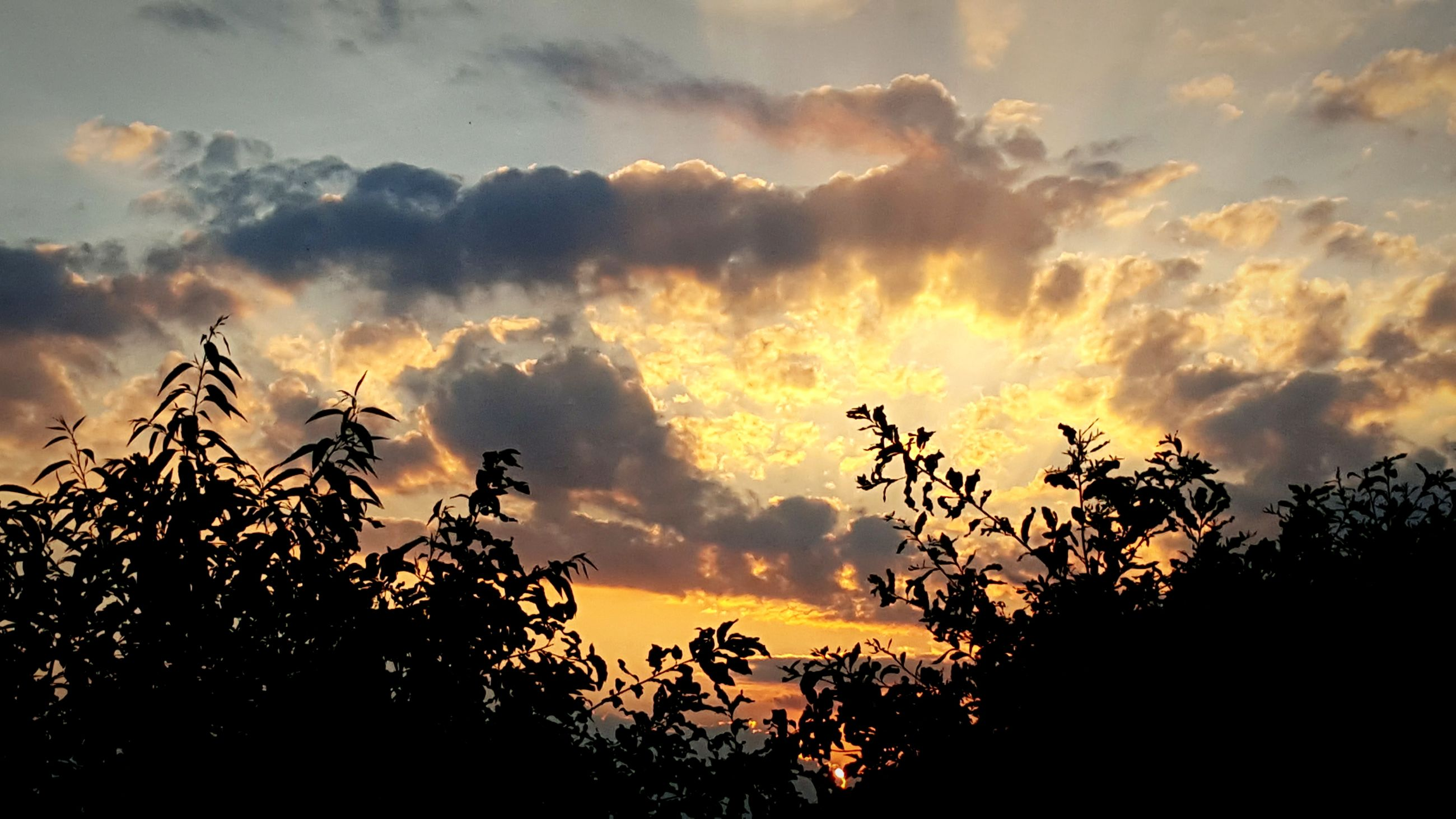 sunset, nature, beauty in nature, silhouette, sky, tree, cloud - sky, orange color, tranquility, growth, no people, scenics, tranquil scene, outdoors, low angle view, day