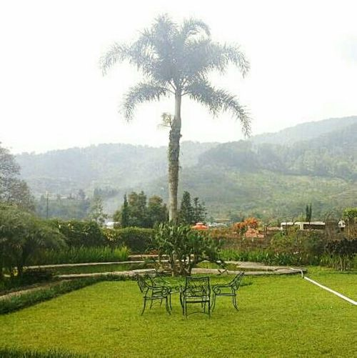 Landscape Fog Nature Tree Outdoors Sky Mountain Beauty In Nature Table Chairs Seating Area Scenery Greenery Grass Beautiful MOther Earth🙊 Hillside Foggy And Rainy EyeEmNewHere