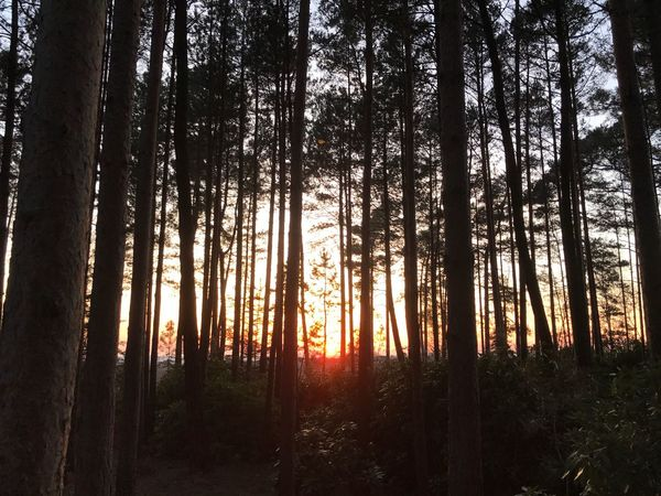 Tree Forest Nature Tranquil Scene Tree Trunk Scenics Tranquility No People Beauty In Nature Growth Outdoors WoodLand Landscape Sunset Day Sky Natural Simplicity EyeEmNewHere Silhouette