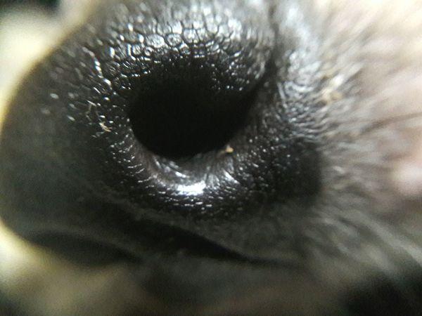Dog Close-up EyeemPhilippines Pets Details Nose Doggy Macro Beauty Macro Photography Phone Photography
