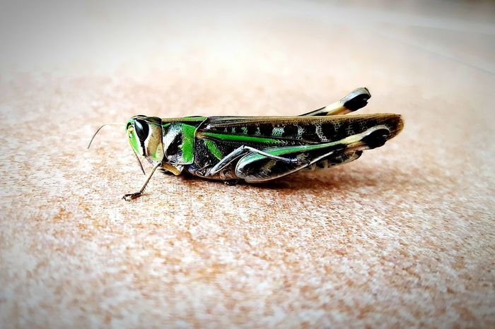 One Animal Insect Animals In The Wild Close-up Animal Wildlife Animal Themes No People Nature Outdoors Day