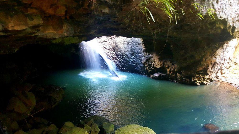 Springbrook National Park Naturalbridge Glow Worm Cave Explore The Gold Coast