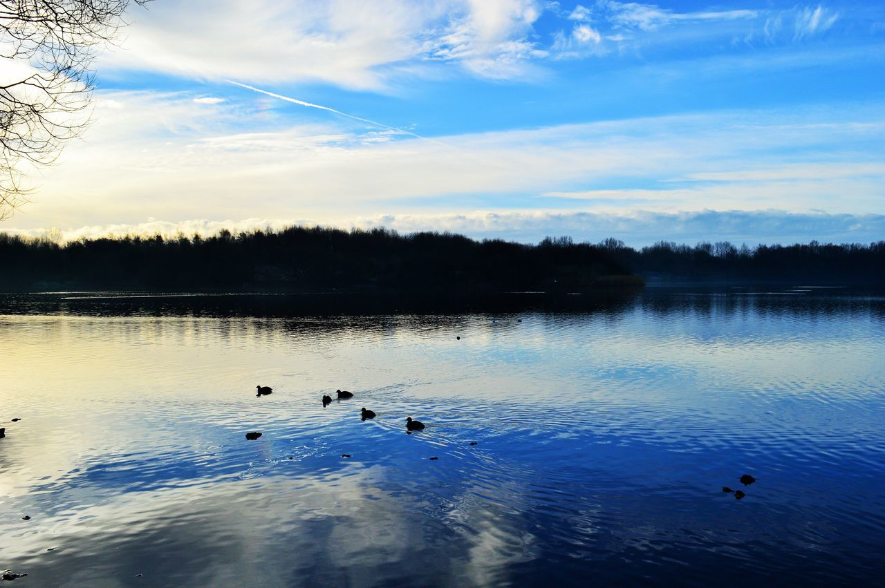 animals in the wild, lake, animal themes, water, nature, bird, animal wildlife, beauty in nature, duck, scenics, swimming, cloud - sky, sky, no people, reflection, water bird, tranquility, outdoors, tranquil scene, tree, swan, floating on water, sunset, day, large group of animals