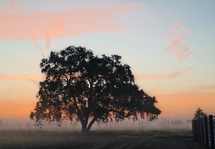 Sunrise Tree Nature Beauty In Nature Sky Tranquility No People Scenics Landscape Growth Outdoors Day Morning Fog Foggy Morning EyeEm Nature Lover EyeEmAwards17 Colour Your Horizn