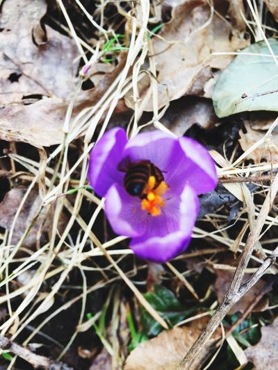 haven't posted any pics here for a while Flower Bee Spring Spring Flowers Nikonphotography Nikoncoolpixp900 Slovenia Passion Nature Beautiful Happiness Good Day Sunny Day