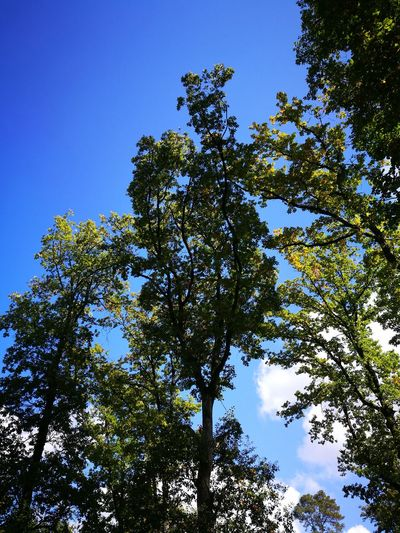 Schönen Sonntag Tree Nature Blue Sky Clear Sky Outdoors No People Freshness Beauty In Nature Day EyeEmNewHere