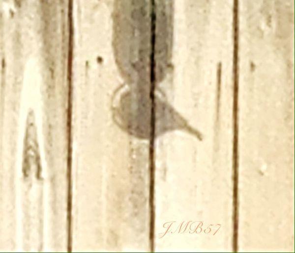 Shadow of Bird on feeder!💃. Streamzoofamily Friends StreamzooCity Streamzoofamily Streamzoo_Ville StreamzooVille StreamzooPics Streamzoofriends Streamzooers Streamzoo StreamzooGirl