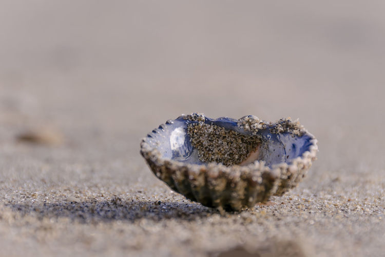 EyeEm Selects Beach Sea Sand Nature Beauty In Nature Seashell Animal Shell Sea Life Shell Sunlight Animal Wildlife Animals In The Wild One Animal Animal Themes Marine Scenics - Nature Outdoors Macro Macro Photography Selective Focus Macro_collection Still Life