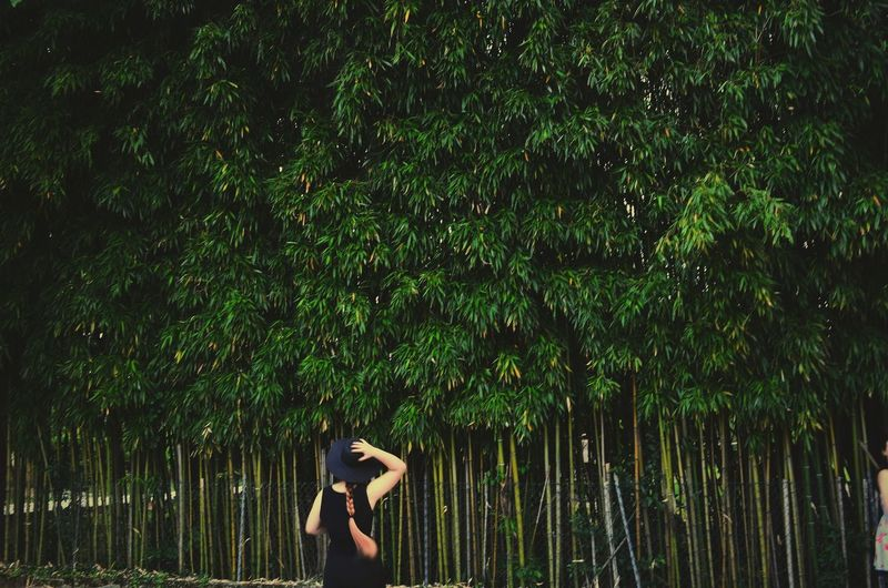Rear View Of Woman Standing At Bamboo Grove