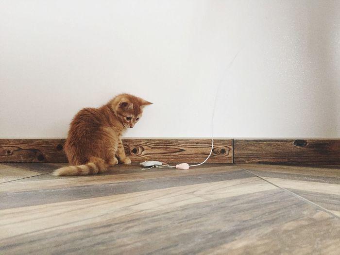 Chaton 🐱 IPhoneography Kitten Cat Mammal Animal Themes Animal One Animal Vertebrate No People Pets Domestic Animal Wildlife Day Sitting Nature Looking