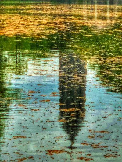 Reflection of tree in lake