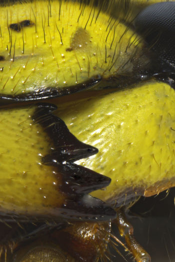Close-up of yellow fruit in water