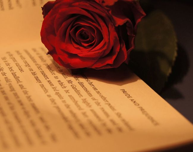Blooming Blossom Book Books Botany Close-up Flower Flower Head In Bloom Macro Petal Pride And Prejudice Red Roses Selective Focus