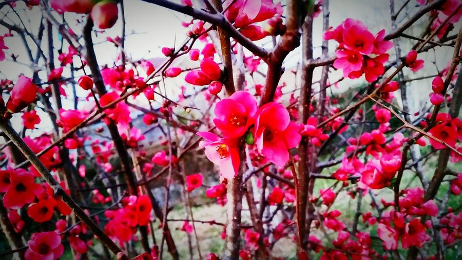 Flowers Red Lovely Spring2017 Freetimephotography