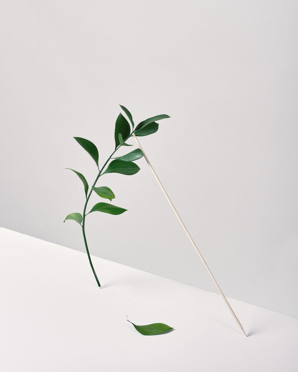 plant part, leaf, studio shot, white background, green color, plant, nature, copy space, growth, indoors, no people, beauty in nature, close-up, vulnerability, fragility, white color, plant stem, cut out, botany, leaves
