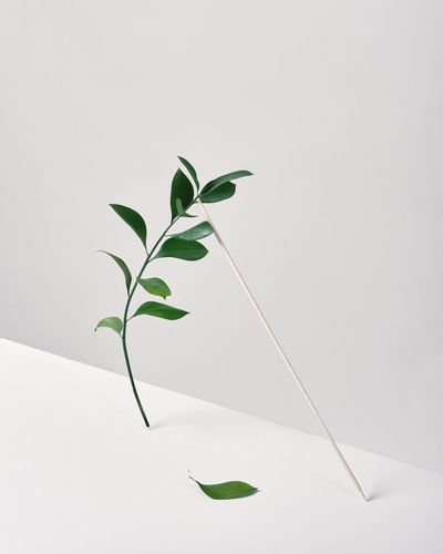 Close-up of plant leaves against white background