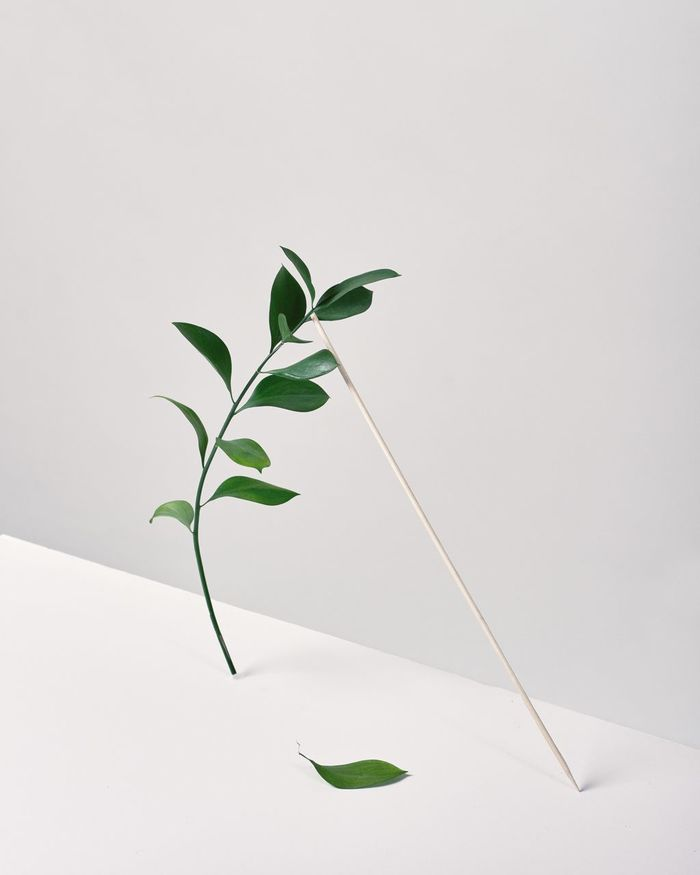 CLOSE-UP OF PLANT LEAVES ON WHITE BACKGROUND