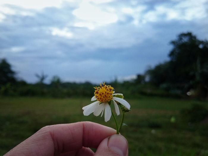 Flower Flower Human Body Part Fragility Nature Human Hand Cloud - Sky One Person Flower Head Beauty In Nature Outdoors
