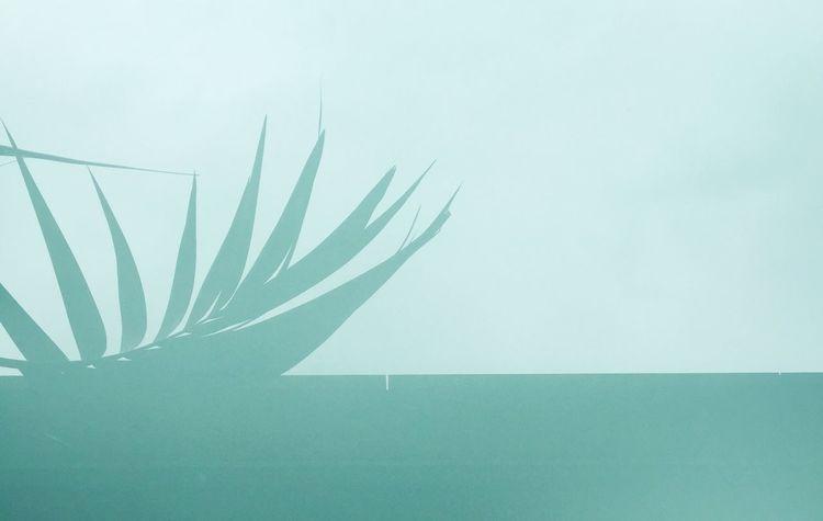 Palmtree Leaf Glassreflection Turquoise Beachfeeling Californiastyle