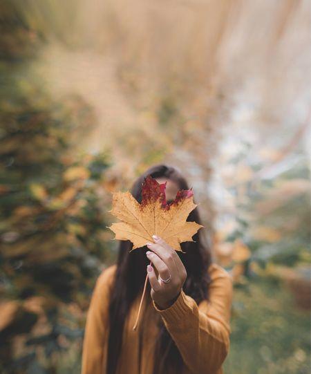 Leaf Autumn One
