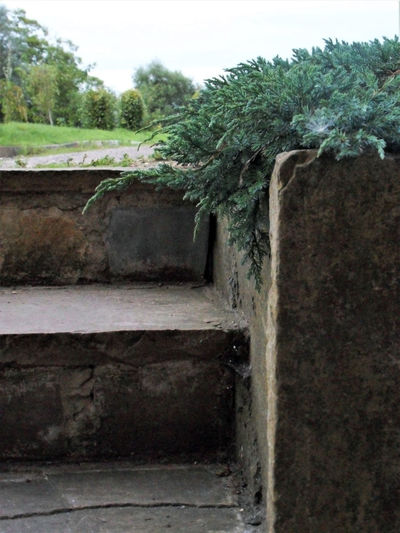 Plant Tree Wall