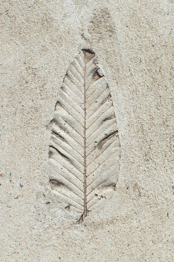Close-up of leaf pattern on wall