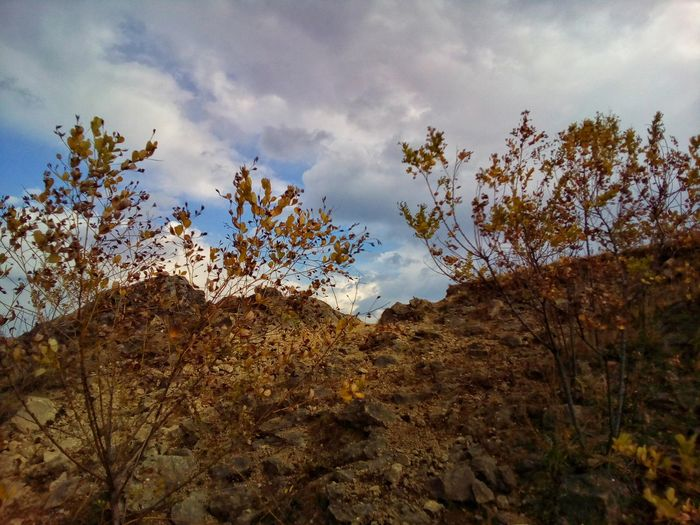 Mountain with the lespedeza thickets Nature Landscape Branch Plant Bush Bushes Lespedeza Thunbergii Lespedeza Sky Cloud - Sky Tree Outdoors Day No People Beauty In Nature Scenics Tranquility Autumn October