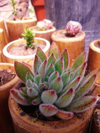 Plants Nature Suculentas Vivero