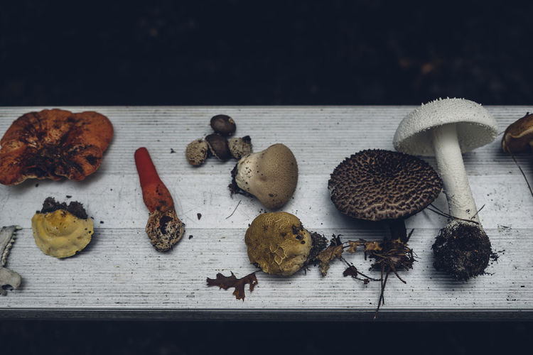 mushroom harvest Food Food And Drink Table Wellbeing Still Life Freshness Healthy Eating Indoors  No People High Angle View Vegetable Wood - Material Plant Part Leaf Fruit Close-up Mushroom Plant Variation Nature