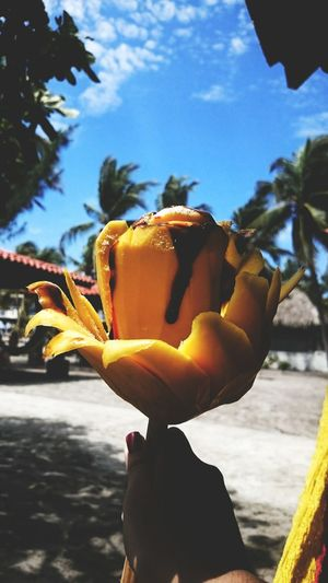 Mango Flower Mango En Flor Beach