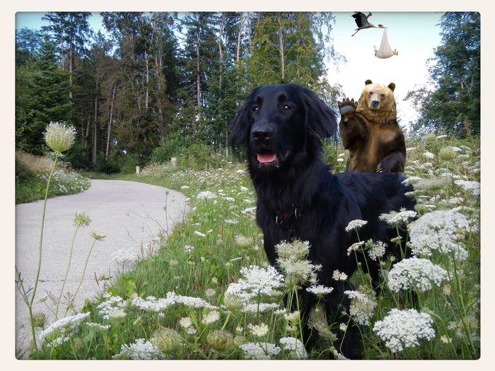A walk with my dog...