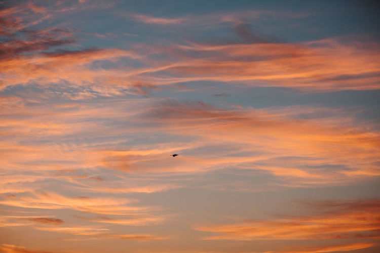 Sky Bird Cloud - Sky Sunset Vertebrate Animal Themes Flying Beauty In Nature Animal Orange Color Scenics - Nature One Animal Low Angle View Animals In The Wild Animal Wildlife Mid-air No People Tranquil Scene Tranquility Nature Outdoors