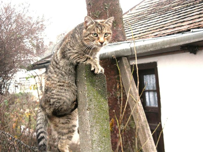 Cat Climbing Beton Nature Sky Portrait No People One Animal Day Outdoors Pets Cute Cats Cica Katze Hungary