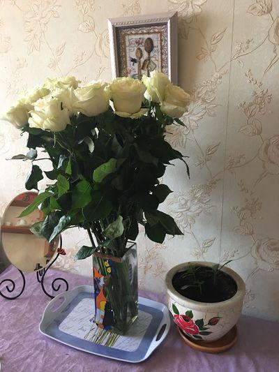 белые цветы розы доброе утро Москва