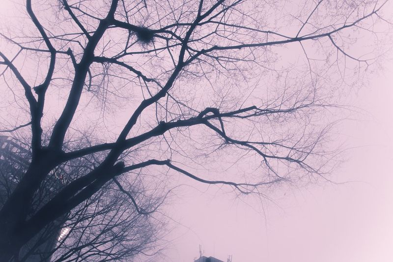 Silhouette Trees Sky Lookingup Drastic Edit Dreamer's Vision Sensai - Sharp&delicate Muted Colors Pastel Fragility Light And Shadow Street Photography Walking Around From My Point Of View Getting Inspired Our Best Pics Romantic Nature Urban Nature The Calmness Within Nature On Your Doorstep The Magic Mission Showcase March Learn & Shoot: Simplicity Beautiful Nature