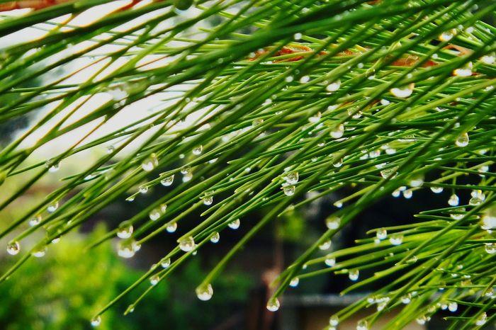 Sommerregen Summerrain Nach Dem Regen ... After Rain Regentropfen Raindrops Draußen Im Grünen Green Grün Beauty In Nature Nature Macro Beauty
