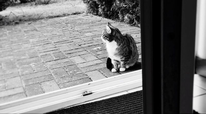 To be (inside) or not to be (inside), a cats hard life Cat Inside Outside Open Door Door Invitation Indecisive Undecided Terrace IPhoneography Iphone6s Animals Furry Friends Entrance Cats Of EyeEm Stubborn Furry Blackandwhite Black And White Telling Stories Differently