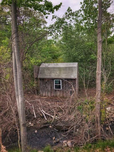 Abandoned & Forgotten Shed in the Wilderness Built Structure Architecture Tree Plant Building Exterior No People Growth Nature Building Day House Outdoors Abandoned Damaged Obsolete Land Old
