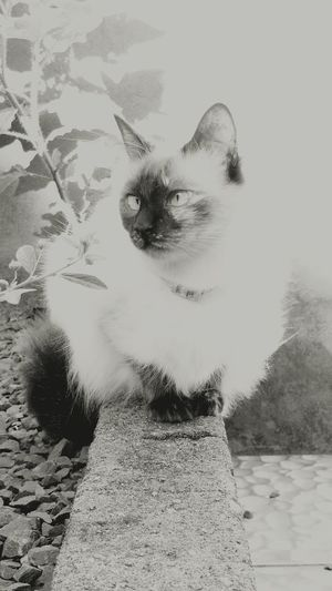 Pets Mammal No People Animal Themes Outdoors Textured  Domestic Cat One Animal Feline Domestic Animals Black And White Friday