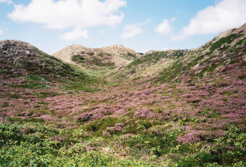 Purple Forever Purple Filmisnotdead Filmisalive Filmphotography Ishootfilm Hanscheko Nature Beauty In Nature Sky Day Tranquility Landscape EyeEmNewHere Outdoors Scenics No People Tranquil Scene Mountain Growth Grass Cloud - Sky Tree EyeEm Ready   EyeEmNewHere