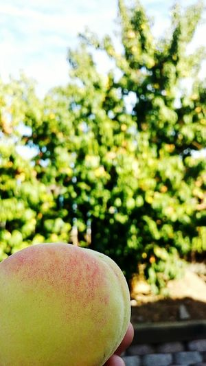 Peach Tree Durazno 🍑