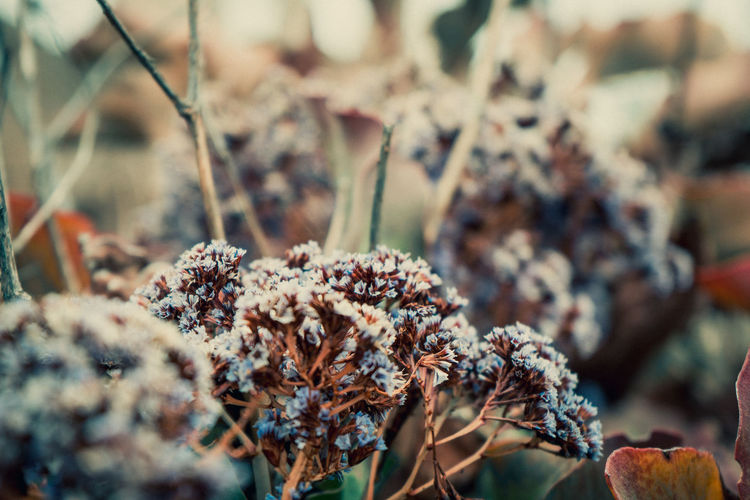 Plant Close-up Beauty In Nature No People Growth Selective Focus Nature Day Dry Flower Flowering Plant Vulnerability  Focus On Foreground Land Fragility Field Outdoors Tranquility Dried Plant Wilted Plant Dead Plant Flower Head Dried