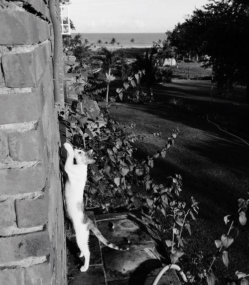 cat View Beautiful Surroundings