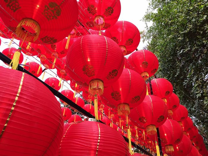 Low angle view of lanterns hanging on tree