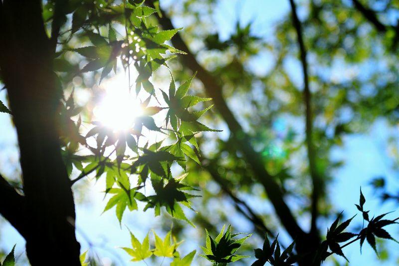 もう少ししたら紅葉🍁も良いんじゃね?٩(๑>∀<๑)۶ Flower Park Autumn Leaves Autumn Collection EyeEm Best Shots - My Best Shot EyeEm Best Shots シルエット部 Shadow And Light Leaf Sun_collection Eyeem Best Shots - Silhouette