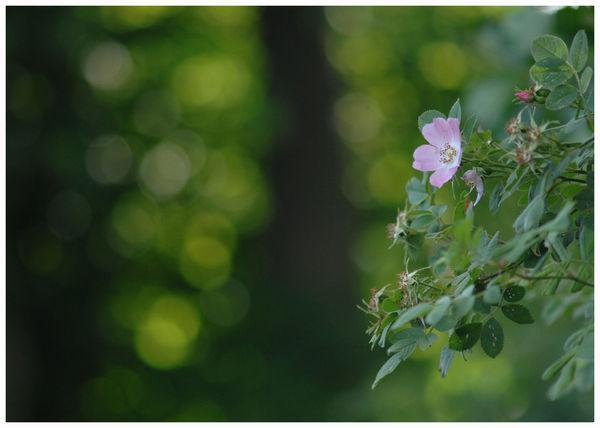 Pink flower forgetmenot Nature Growth Close-up Beauty In Nature Flower Flower Head Kirriemuir Countryside Garden Plants Green Tiny