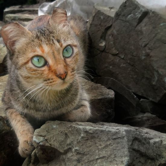 Pet Portraits Young Animal EyeEmNewHere EyEmNewHere Cats Bekindtoanimals Cats Of EyeEm