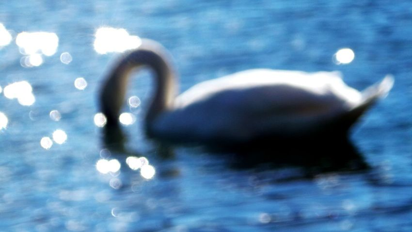 Defocused Close-up Focus On Foreground Waterfront Bokeh Beauty In Nature Animal Themes Schwanenteich Autumn 2016 September 2016 The Places I've Been Today